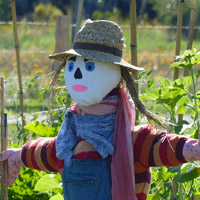 jardinage permaculture