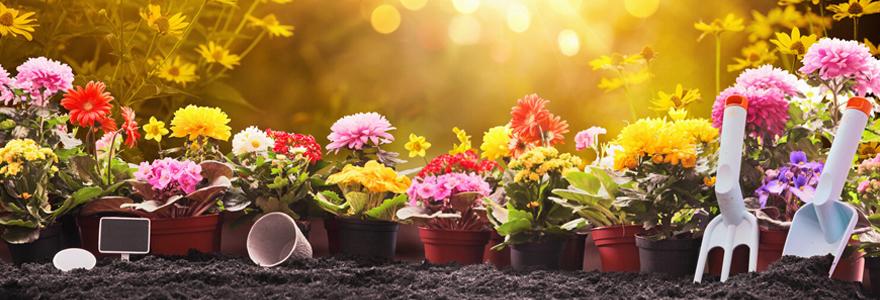 Achat de pots de fleurs